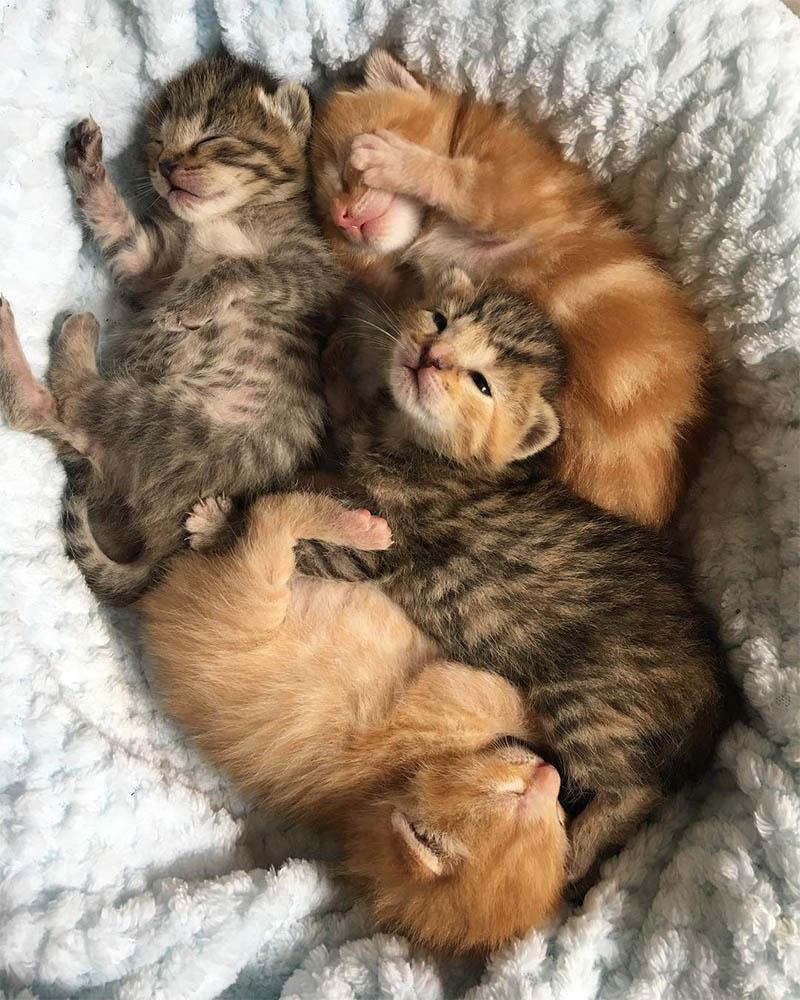 Bebés gatitos