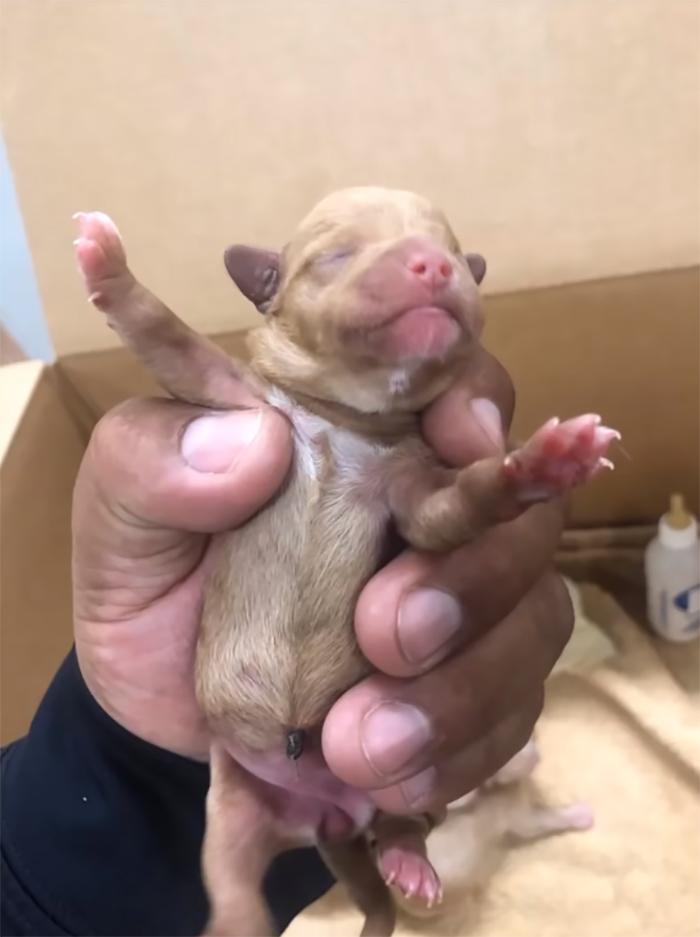Cachorro de 3 días abandonado