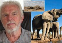 Cazador ha acabado con mas de 5000 elefantes