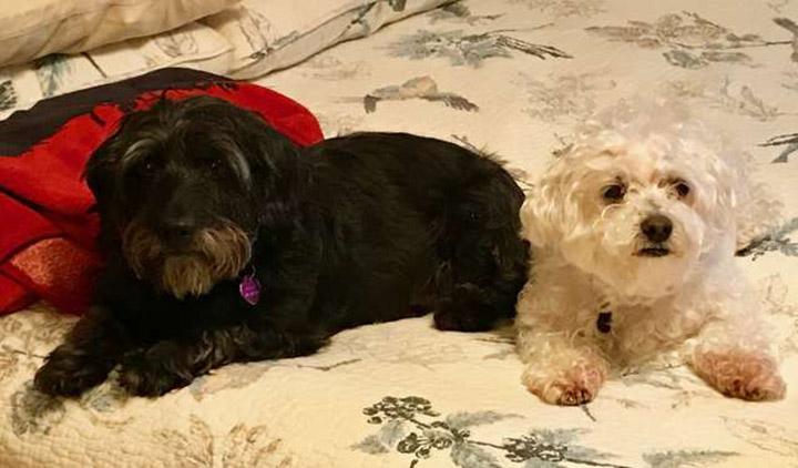 Dobby y su hermano