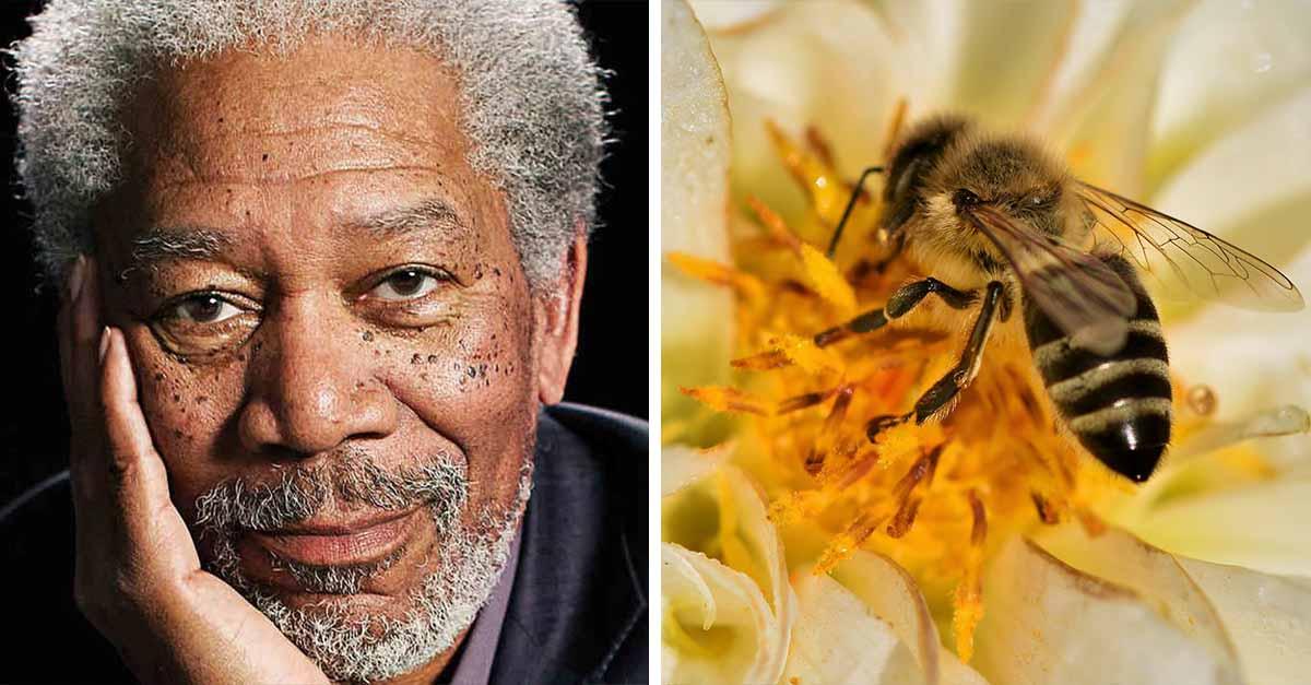 El famoso actor Morgan Freeman creó un santuario para salvar abejas