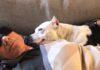 El nuevo perrito del famoso Patrick Stewart no puede dejar de sonreirle