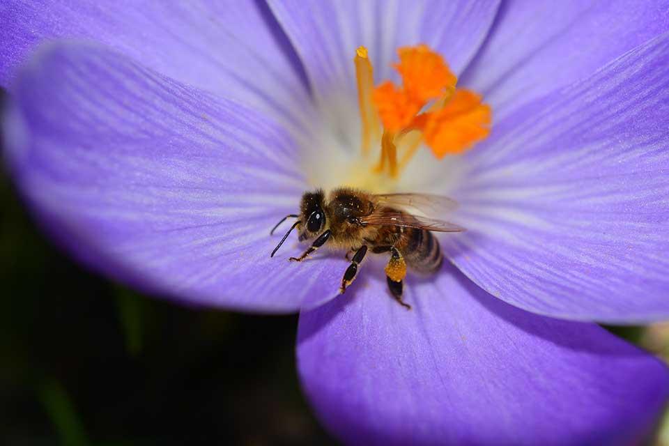 Flor violeta y abeja