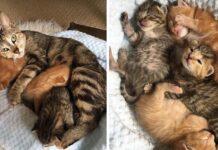 Gata sin hogar regresa a buscar a sus gatitos