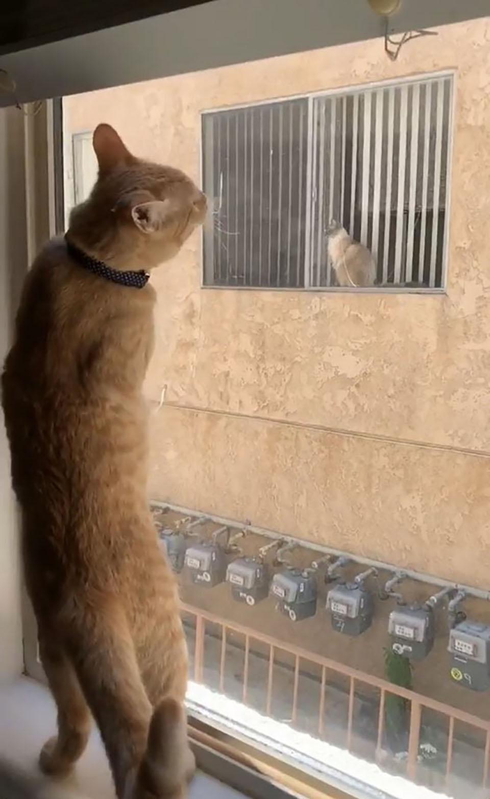 Gatito adora ver a su amigo gatuno