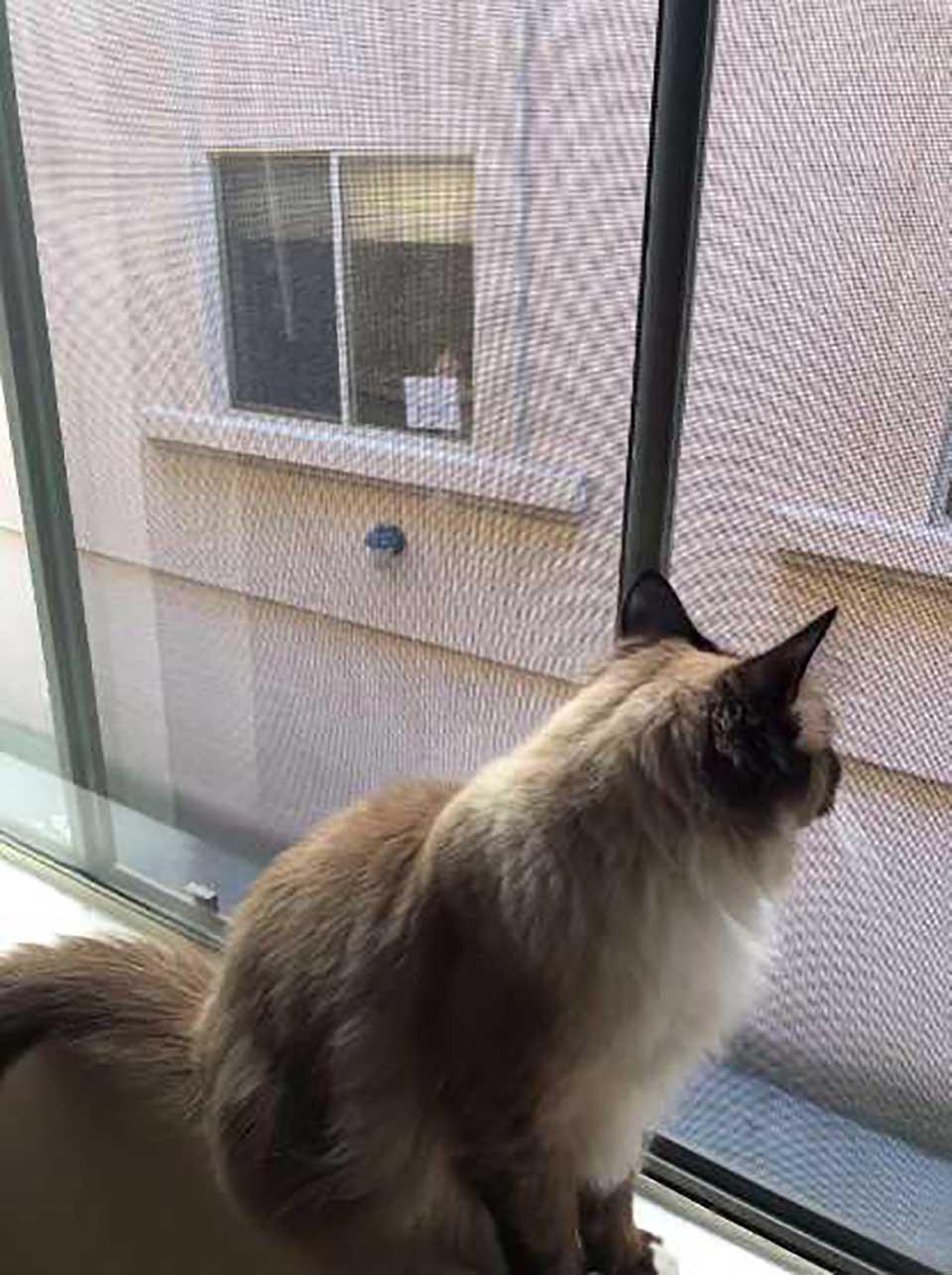 Gatito llamado Theo mira a su amigo desde su ventana