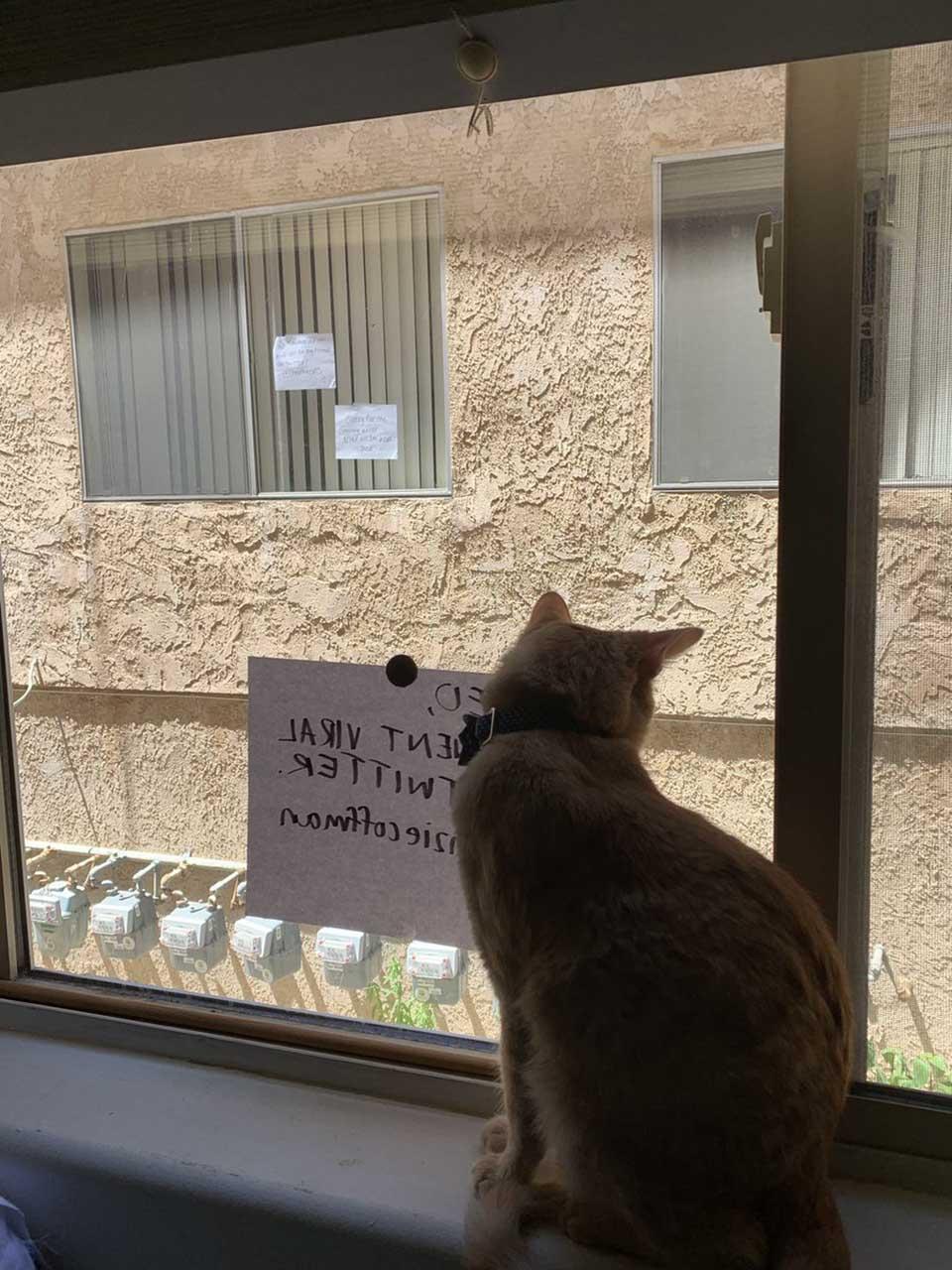 Gato espera ver a su amigo desde la otra ventana
