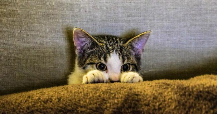 Gatos reconocen sus propios nombres y nos ignoran