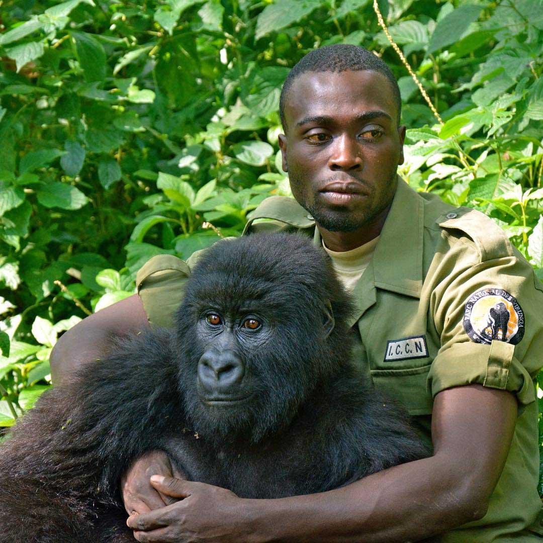 Gorila y su cuidador