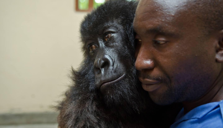 Gorilas y guardabosques tienen vínculo especial