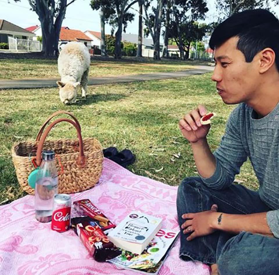 Hombre en picnic y su alpaca