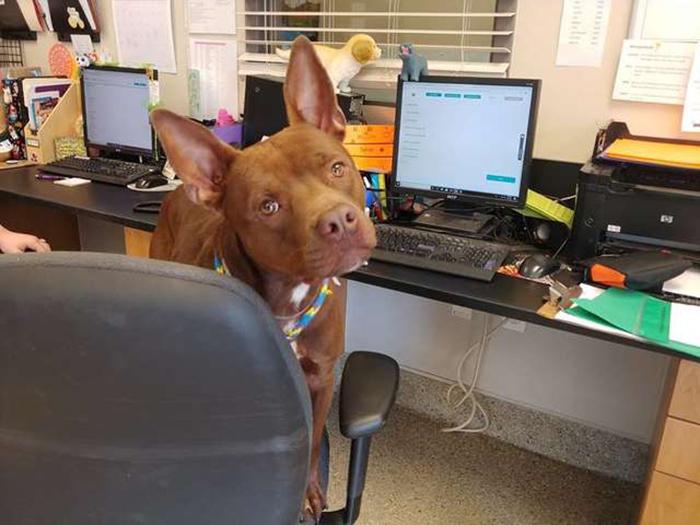 Kenny en la oficina