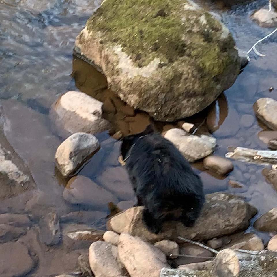 Oso en río congelado