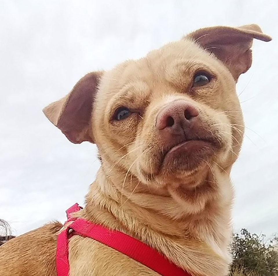 Paco es un perro con muchas habilidades