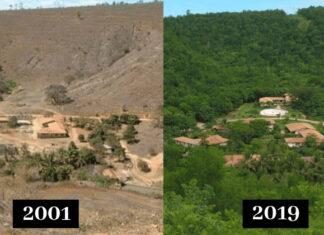 Pareja reforesta un bosque destruido plantando 2 millones de árboles