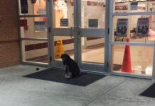 Perrito afuera de una escuela esperaba que alguien lo ayudara
