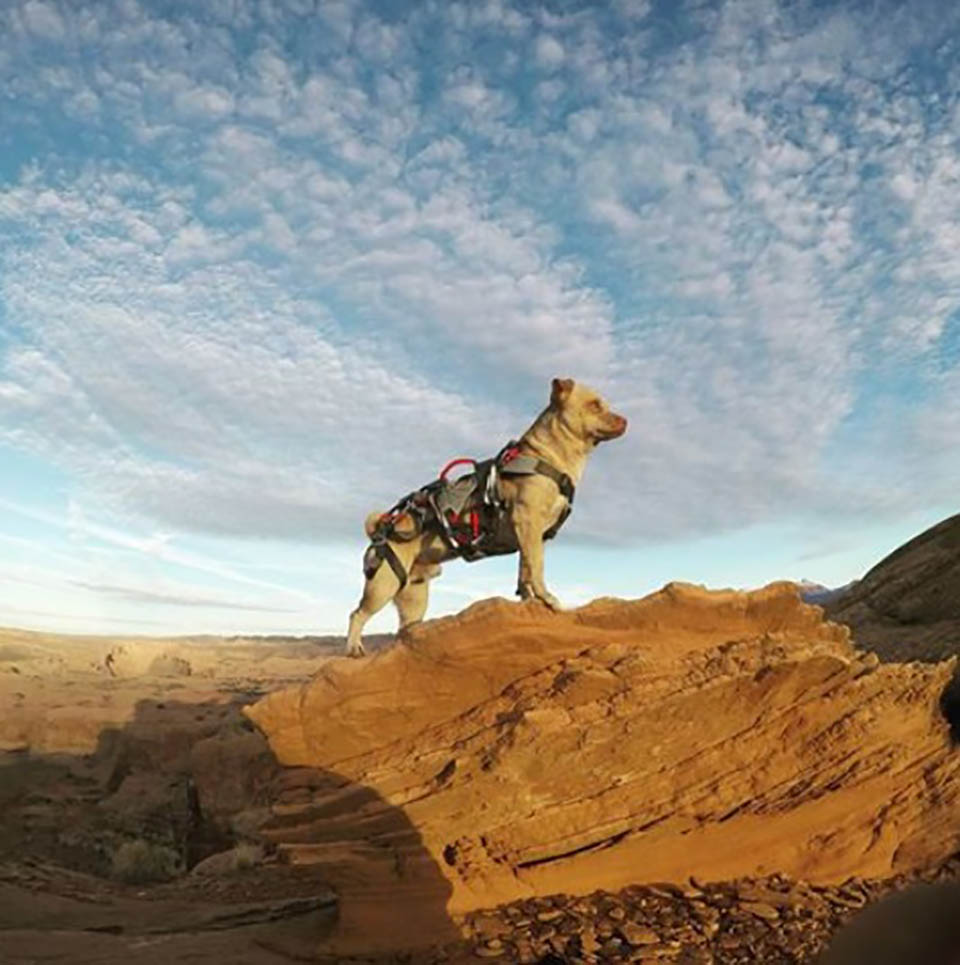 Perrito disfruta estar en la cima