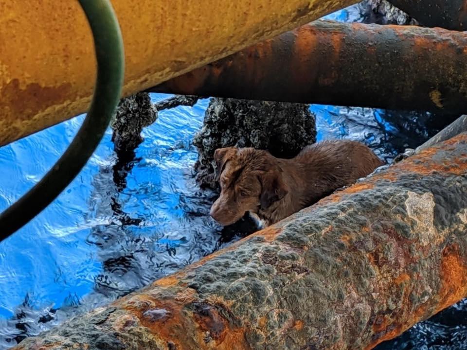 Perrito fue encontrado en el agua