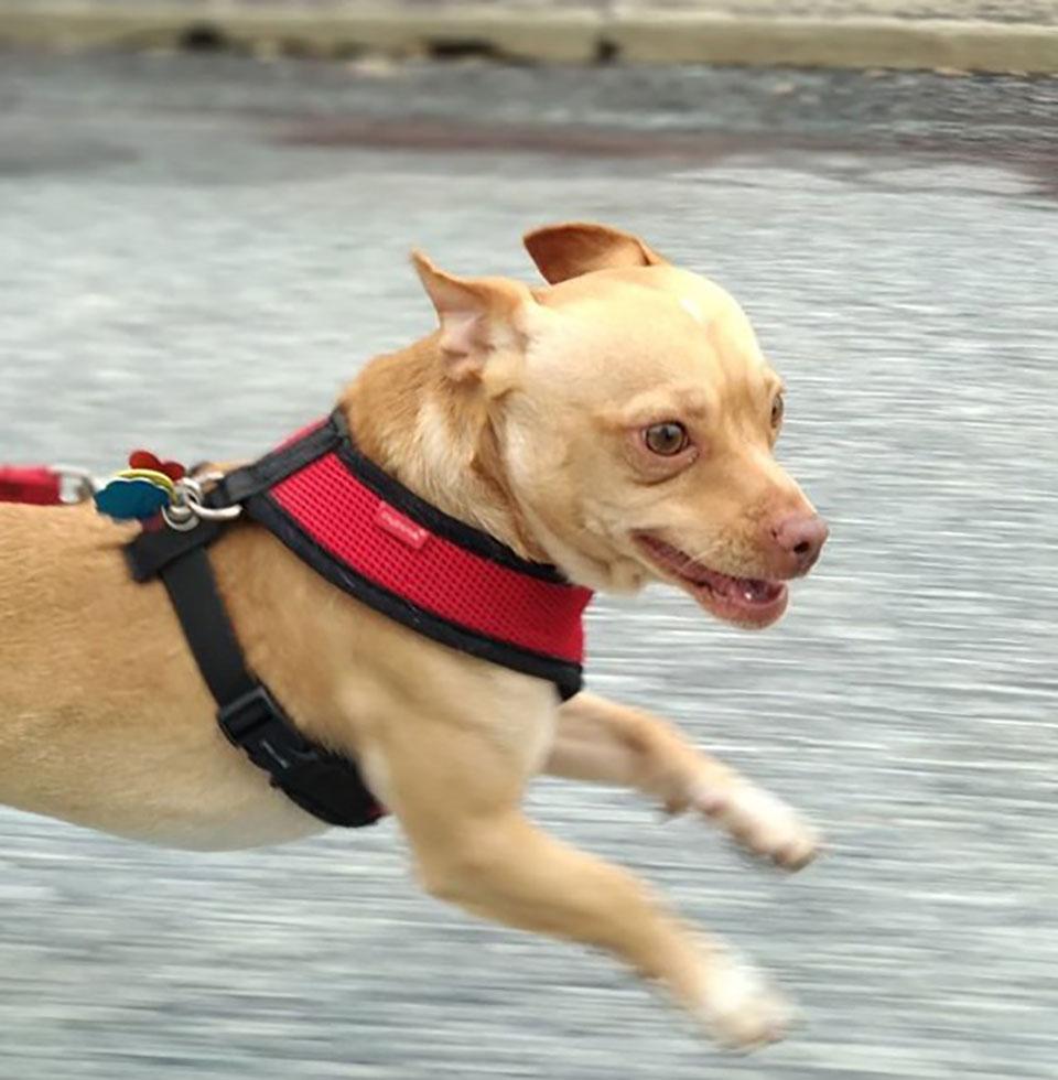 Perrito rescatado corre