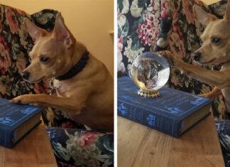 Perrito usa bola de cristal para ver a la acera y proteger a su familia