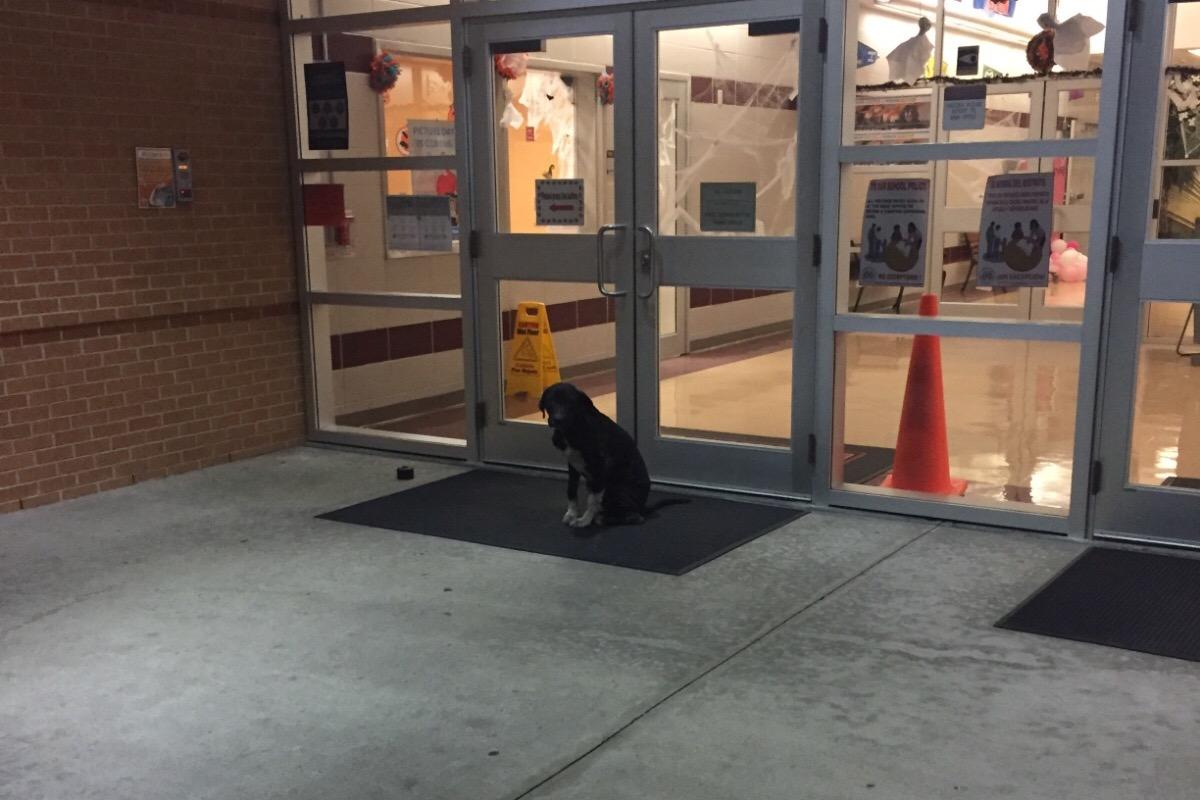 Perro esperando afuera de la escuela