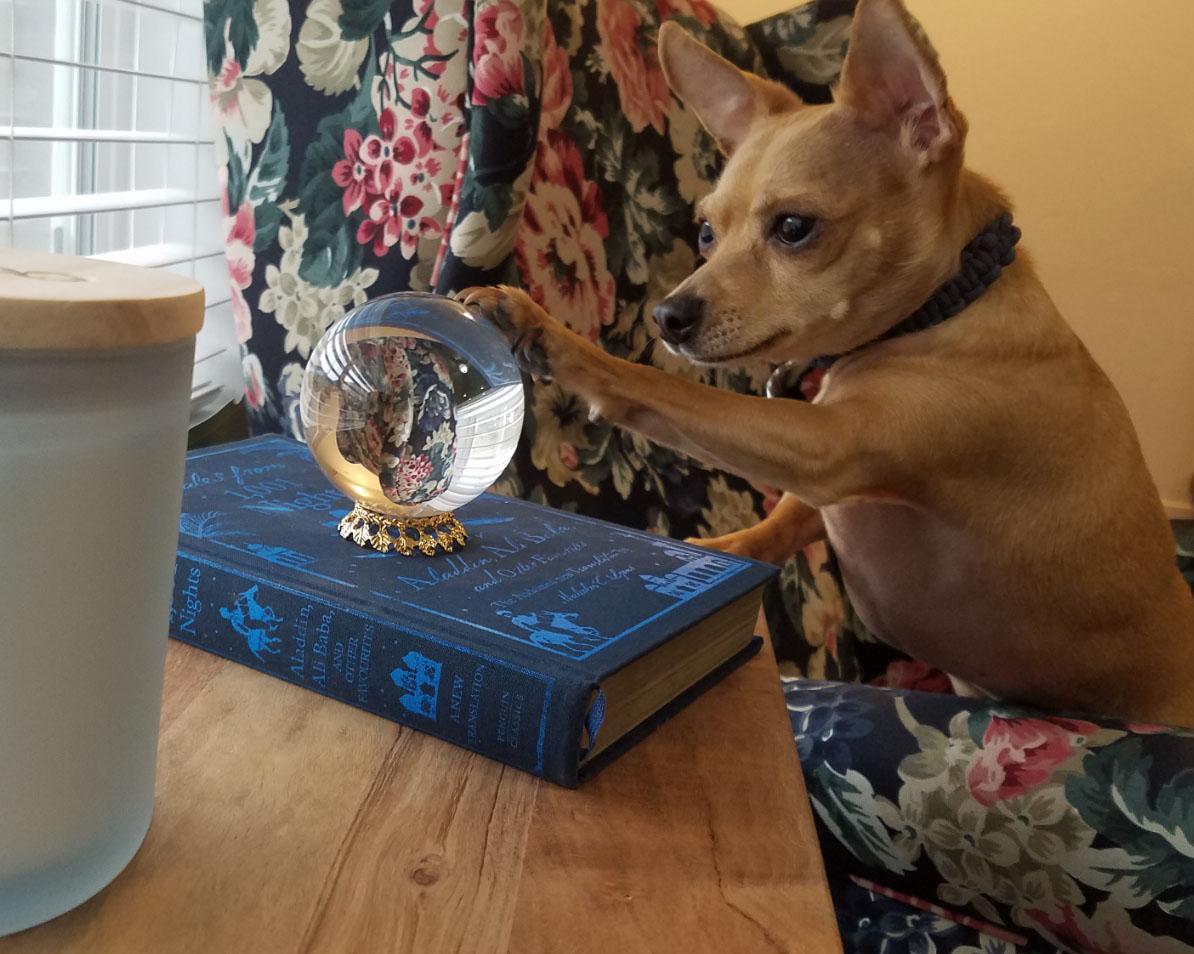 Perro mira en la bola de cristal