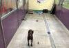 Perro queda solo en el refugio