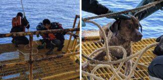 Rescatan a perrito que nadaba a 135 millas de la costa tailandesa