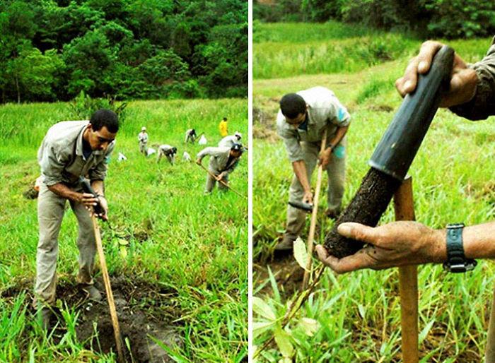 Sebastião y su esposa Lélia reforestaron un bosque