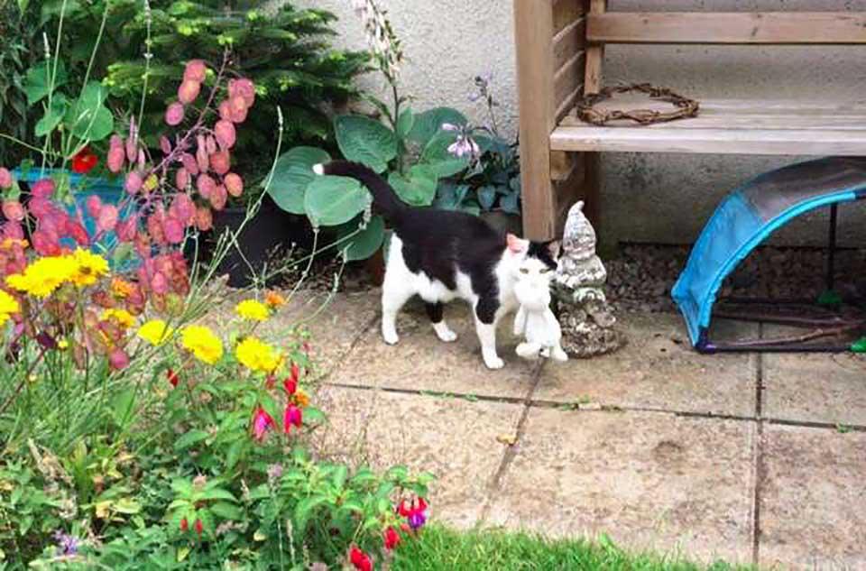 Gatita con su peluche en el jardín
