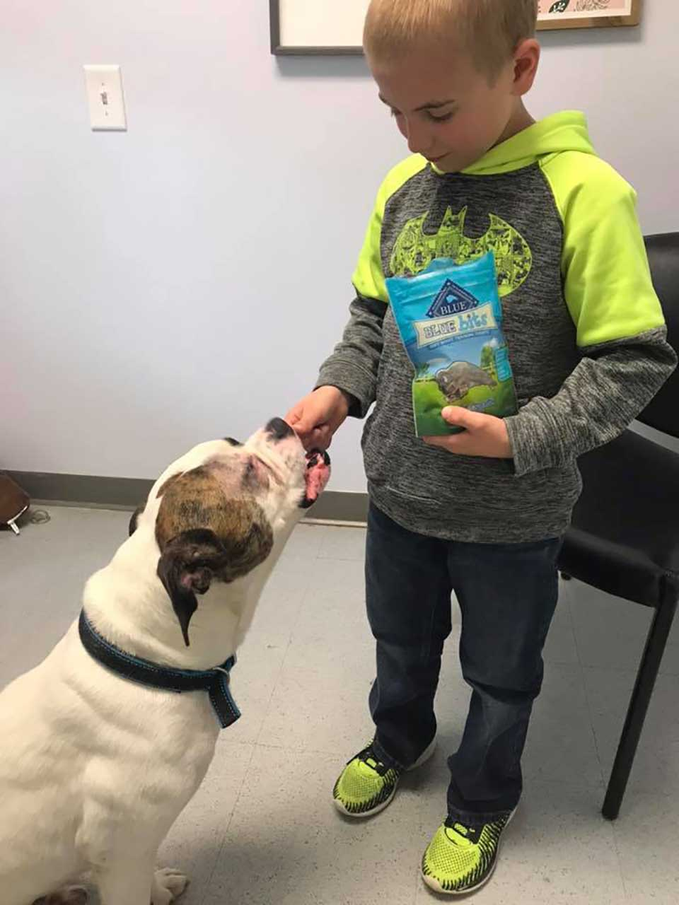 Niño alimenta a perro