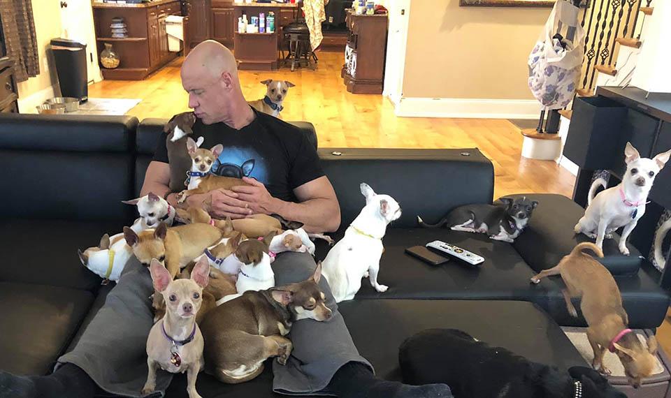 Pequeños perros en sofá
