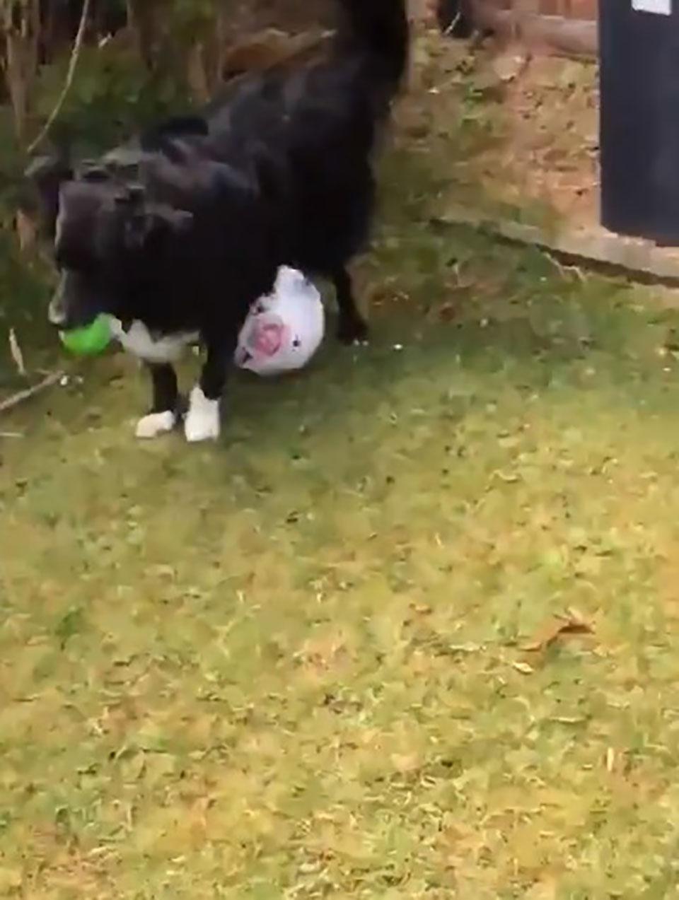 Perrito tiene balón de fútbol entre sus patas