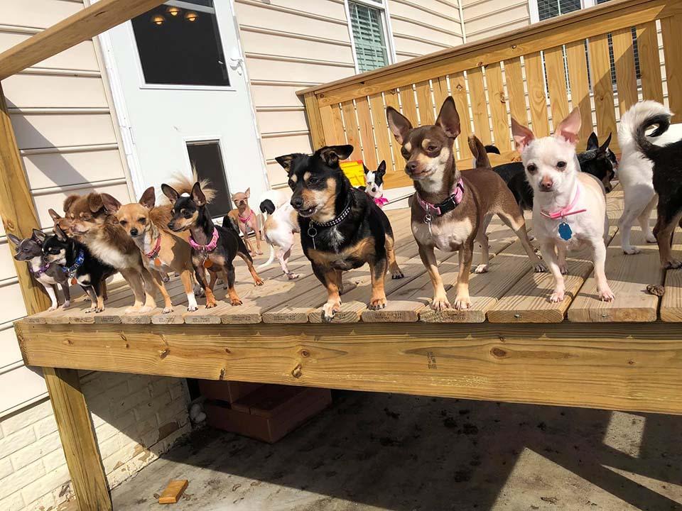 Perritos tamaño pequeño disfrutan un bello día