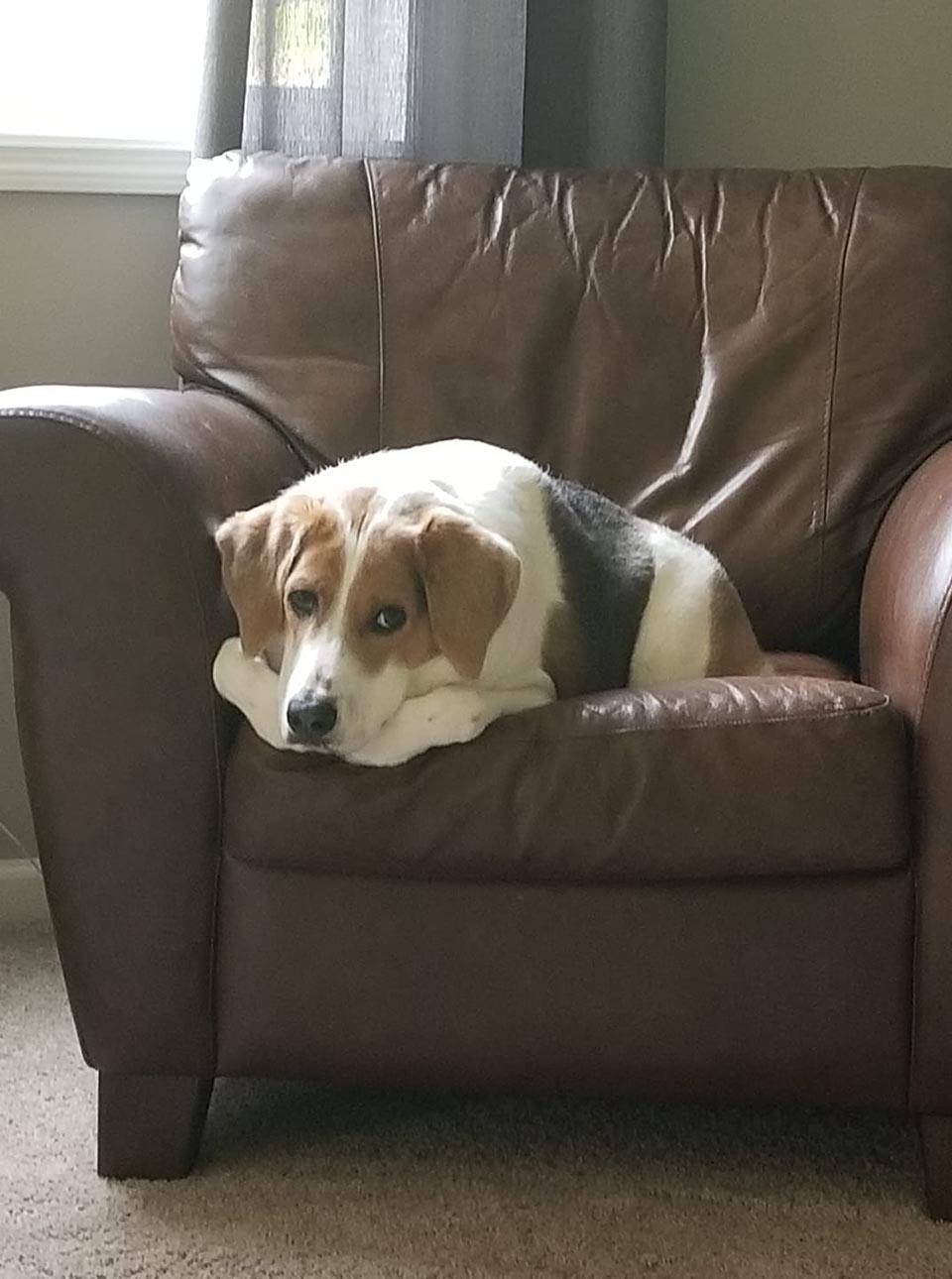 Cooper descansa en sofá