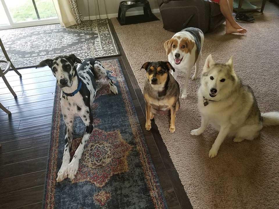Cooper en su hogar con sus amigos