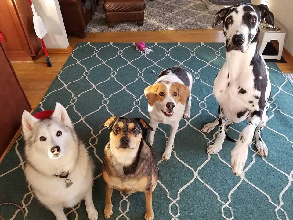 Cooper y perritos