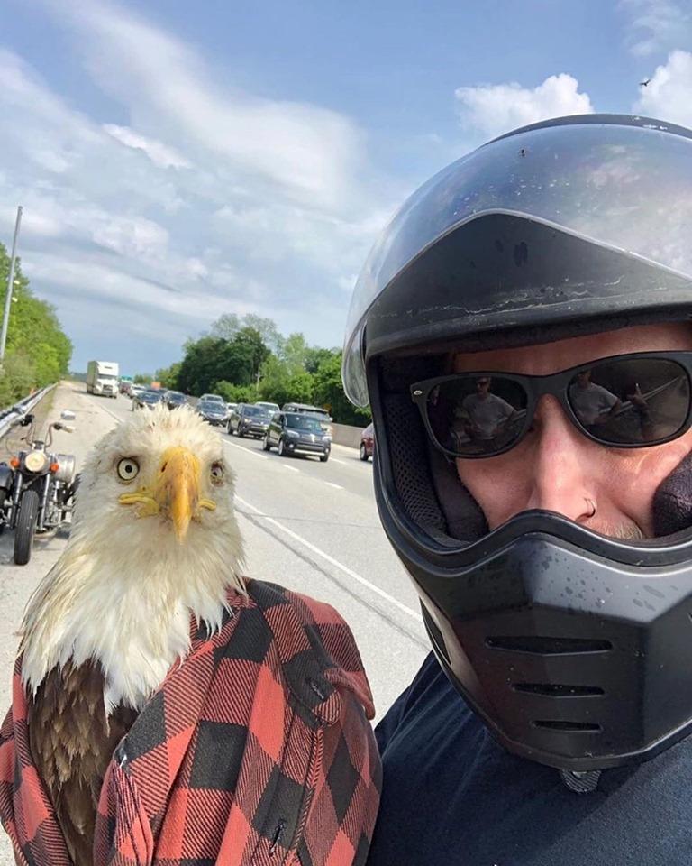 Dandon y el águila