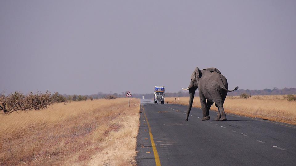 Elefante en carretera de Botsuana