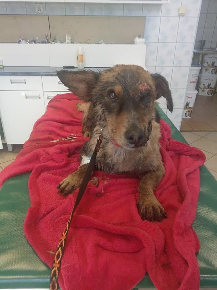 Farcik en el veterinario