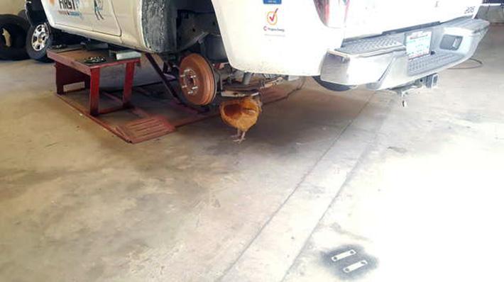 Gallo mecánico