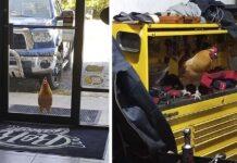 Gallo trabaja en un taller mecánico