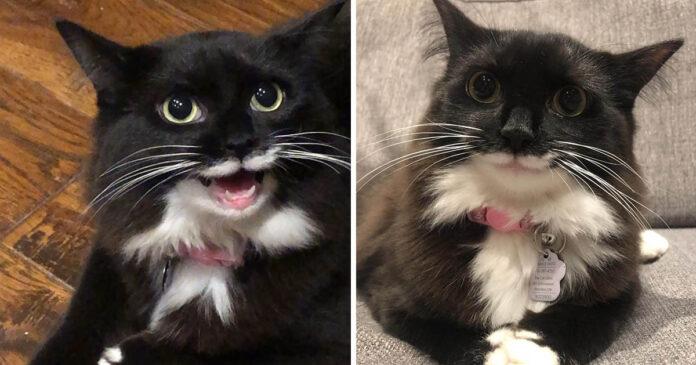 Gatita no deja de sonreír desde que fue rescatada