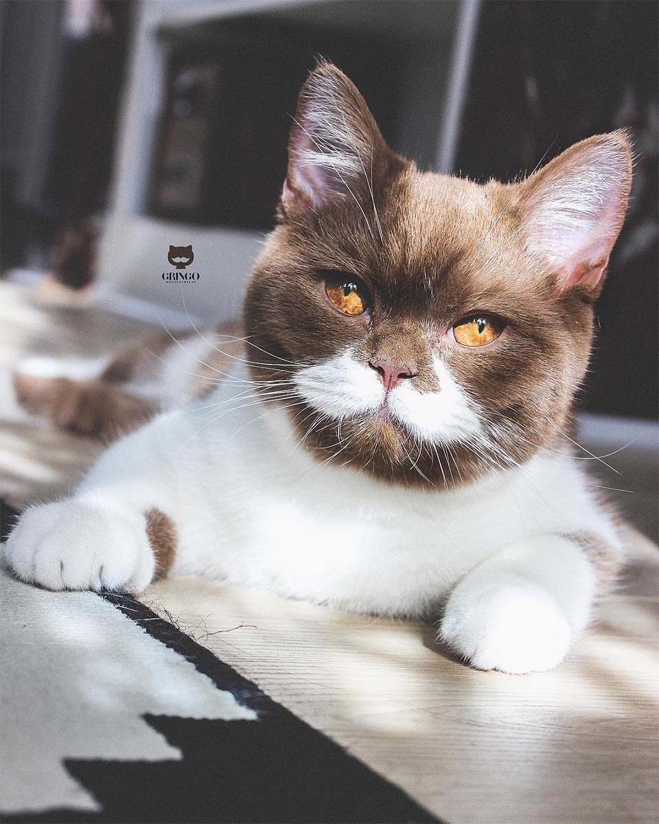 Gato con bigote blanco