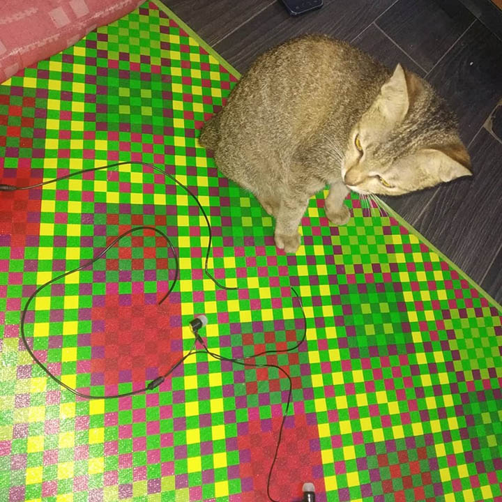 Gato daña audífonos