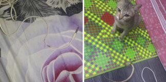 Gato rompe los audífonos y los reemplaza con una serpiente