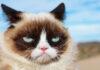 Grumpy Cat fallece a los 7 años de edad