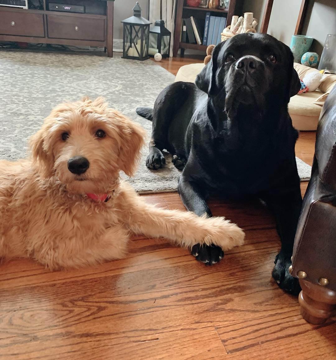 Leo y su hermano