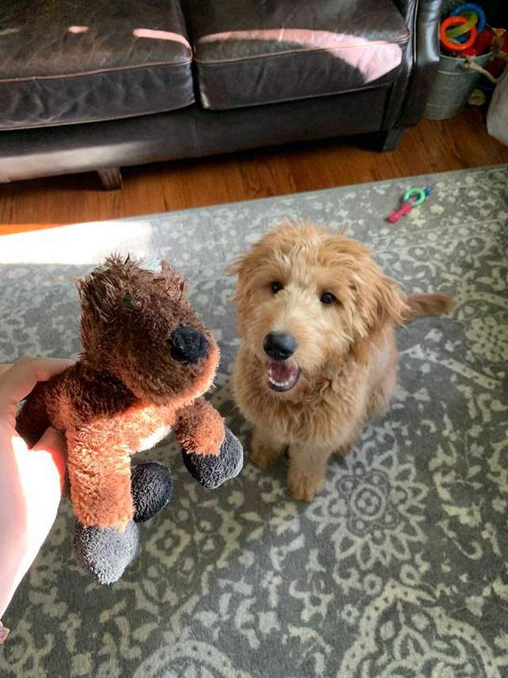 Leo y su juguete favorito