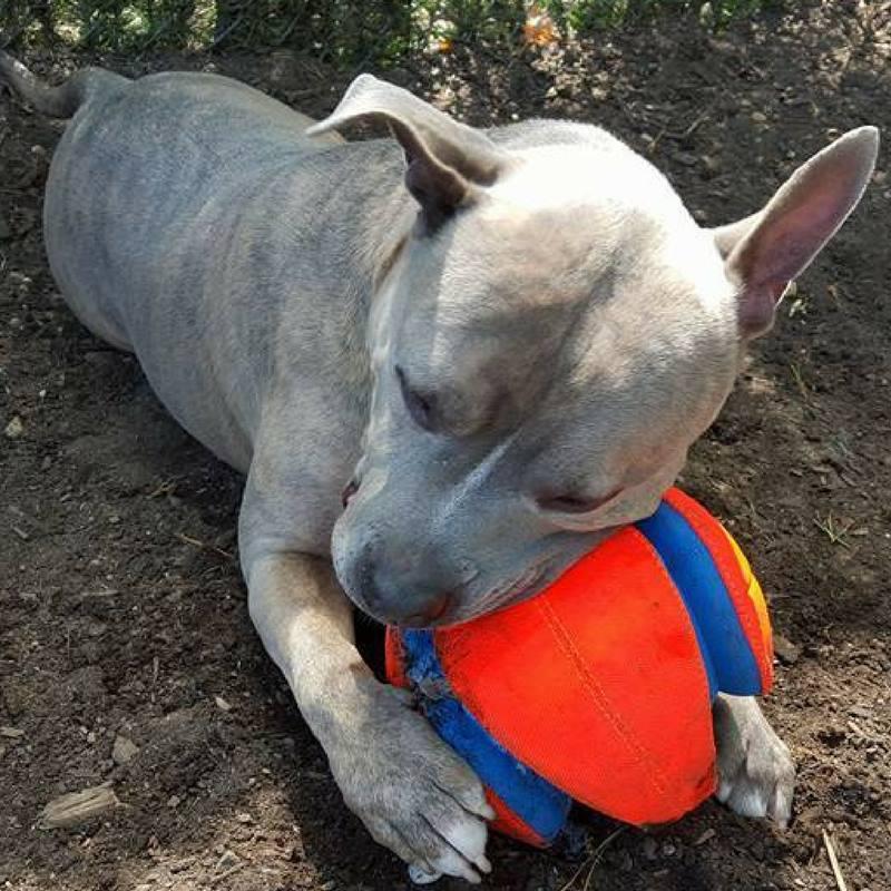 Nitro juega con la pelota